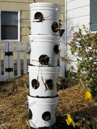 Vertical Strawberry Planter Learn About Planting In Vertical Strawberry Towers Strawberry Planters Diy Strawberry Plants Strawberry Tower