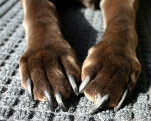 How To Trim Your Dog\'s Nails - Here\'s Everything You Need To Know ...