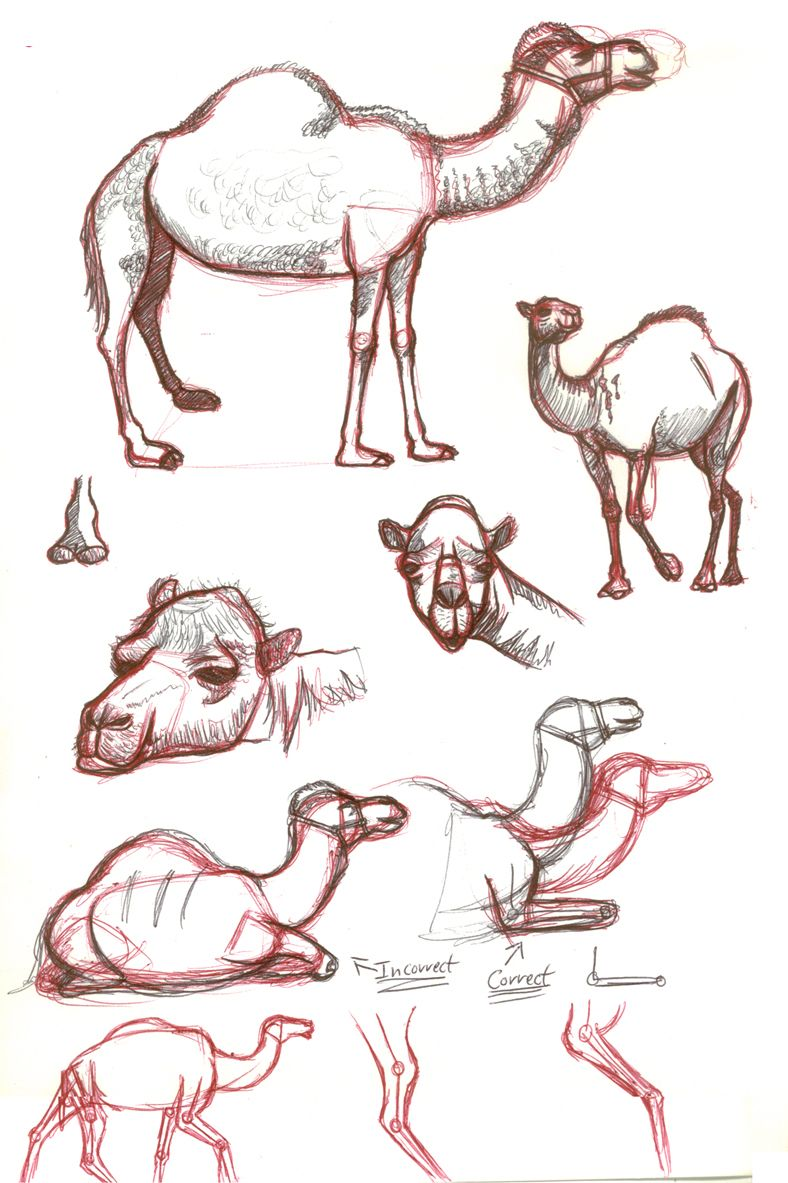 artists drawings of camels | Camel sketches by astrocity20