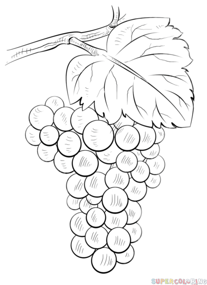 How To Draw Grapes Step By Step Drawing Tutorials Flower Drawing Tutorials Grape Drawing Fruits Drawing