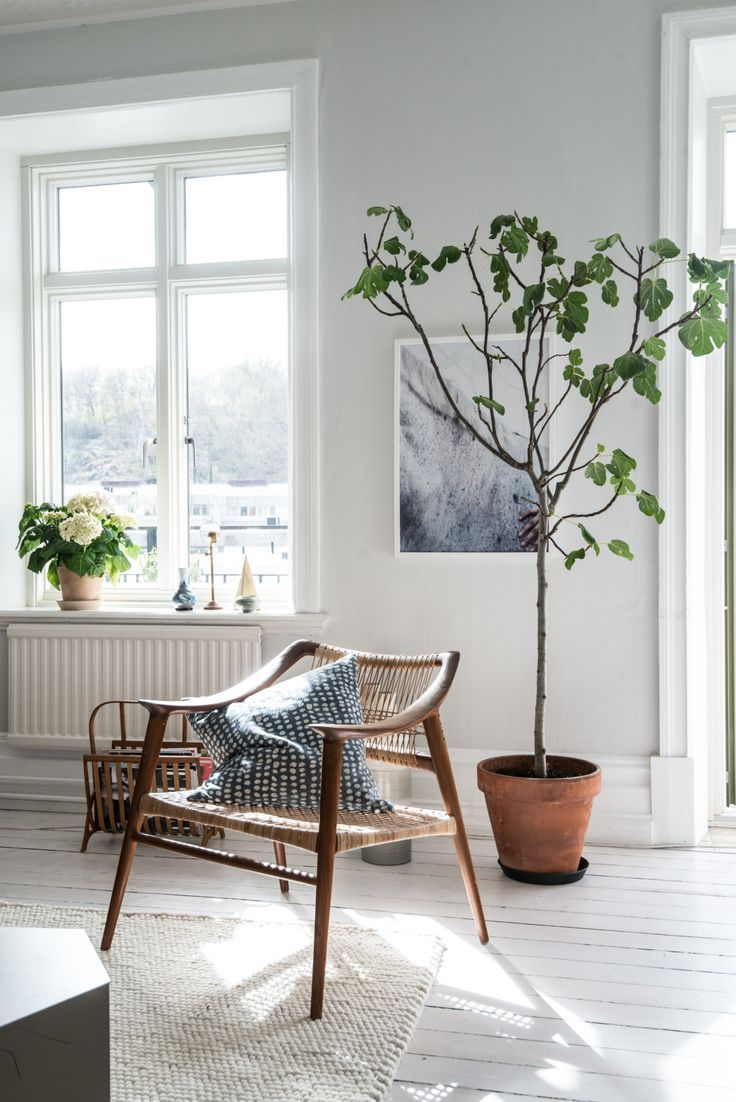 Living room, white floors and walls, tree, woven chair | Fresh ...