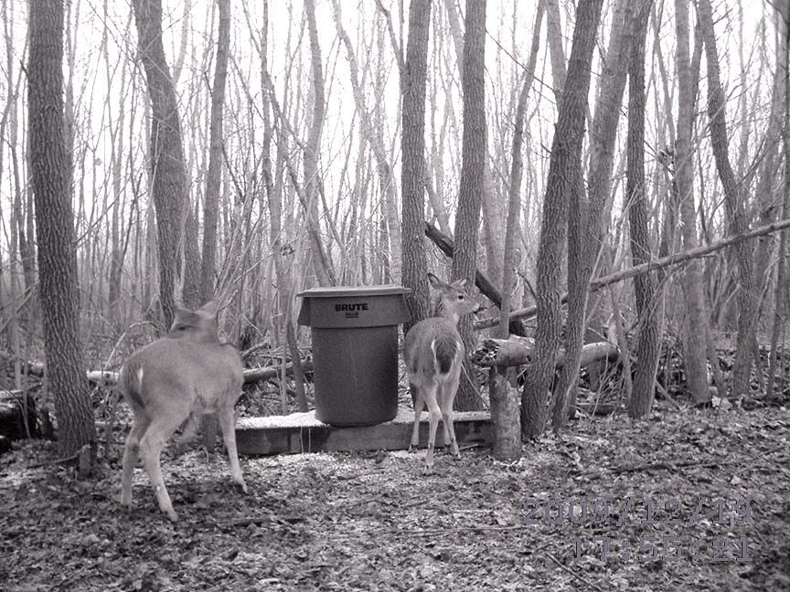 Homemade feeders and feeding deer birds animals for How to build a deer feeder out of pvc pipe
