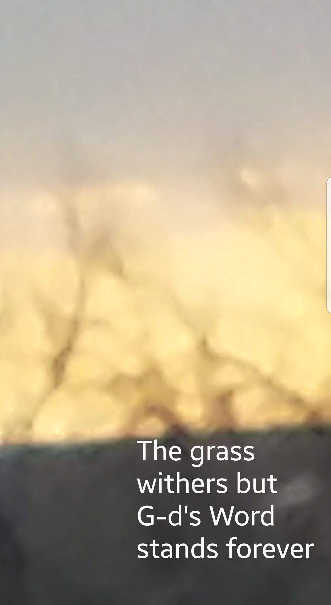 Isaiah 40 8 The Grass Withers The Flower Fades But The