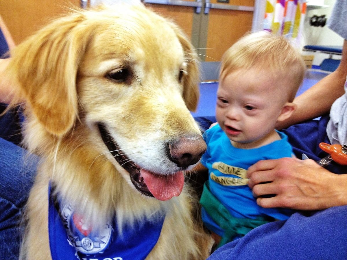 Down syndrome and physical therapy - Meet Eli The Physical Therapy Golden Retriever Noah S New Best Friend