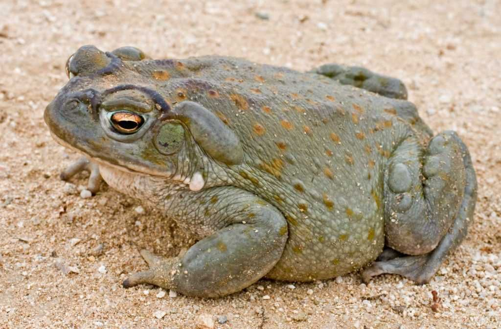 What are the different types of toads? There are around 6000 species of frogs and toads and, while toads are considered frogs, toads generally have ro...