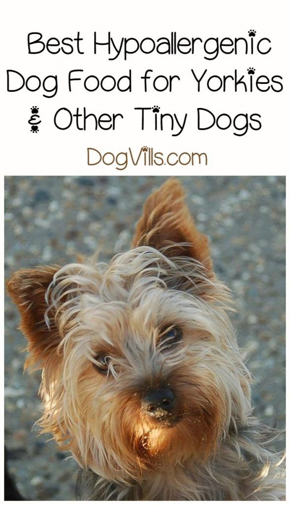 Best Hypoallergenic Dog Food For Yorkies Repin Palooza