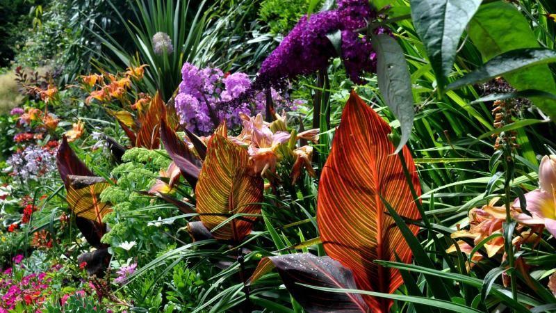 Tropical Garden Plants And Flowers Colour
