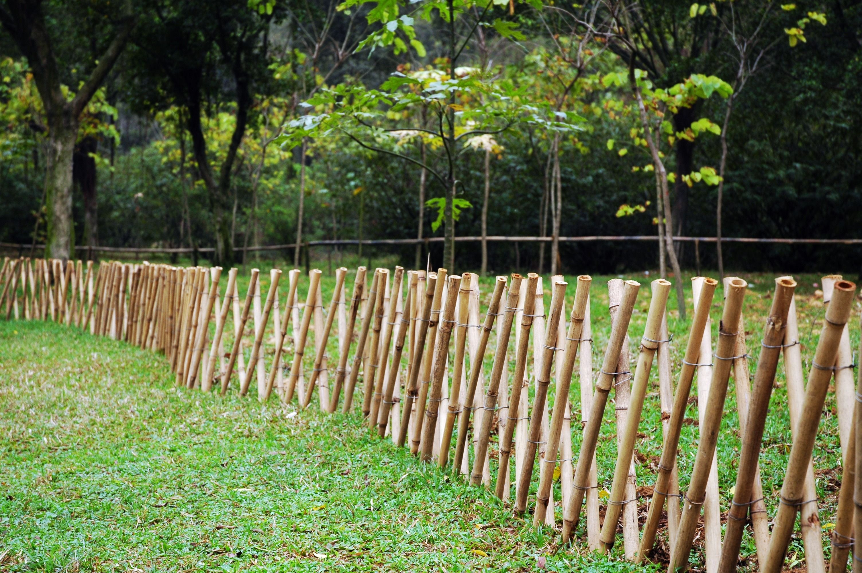Bamboo Fence Google Search Bamboo Garden Garden Fence Diy
