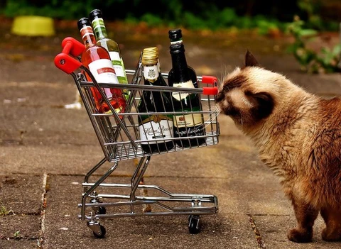 A List Of Toxic Food For Cats in 2020 Cat shelter, Wine