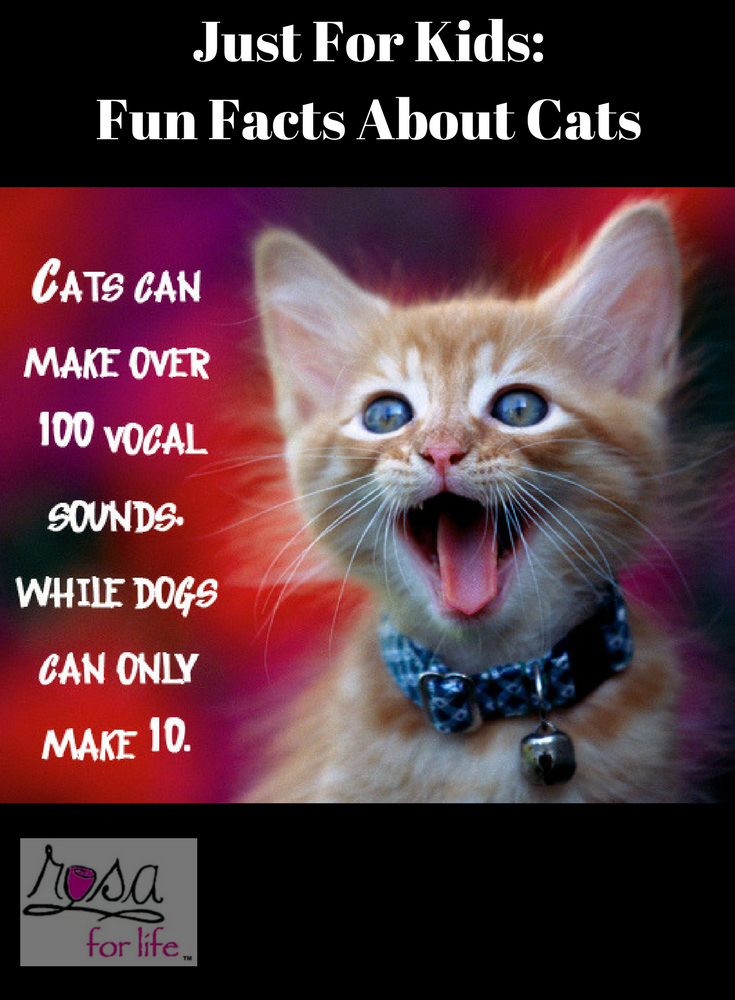 Just For Kids Fun Facts About Cats We Love To See Them Play With Them And Live With Them But How Much Do Fun Facts About Cats Cat Facts Fun