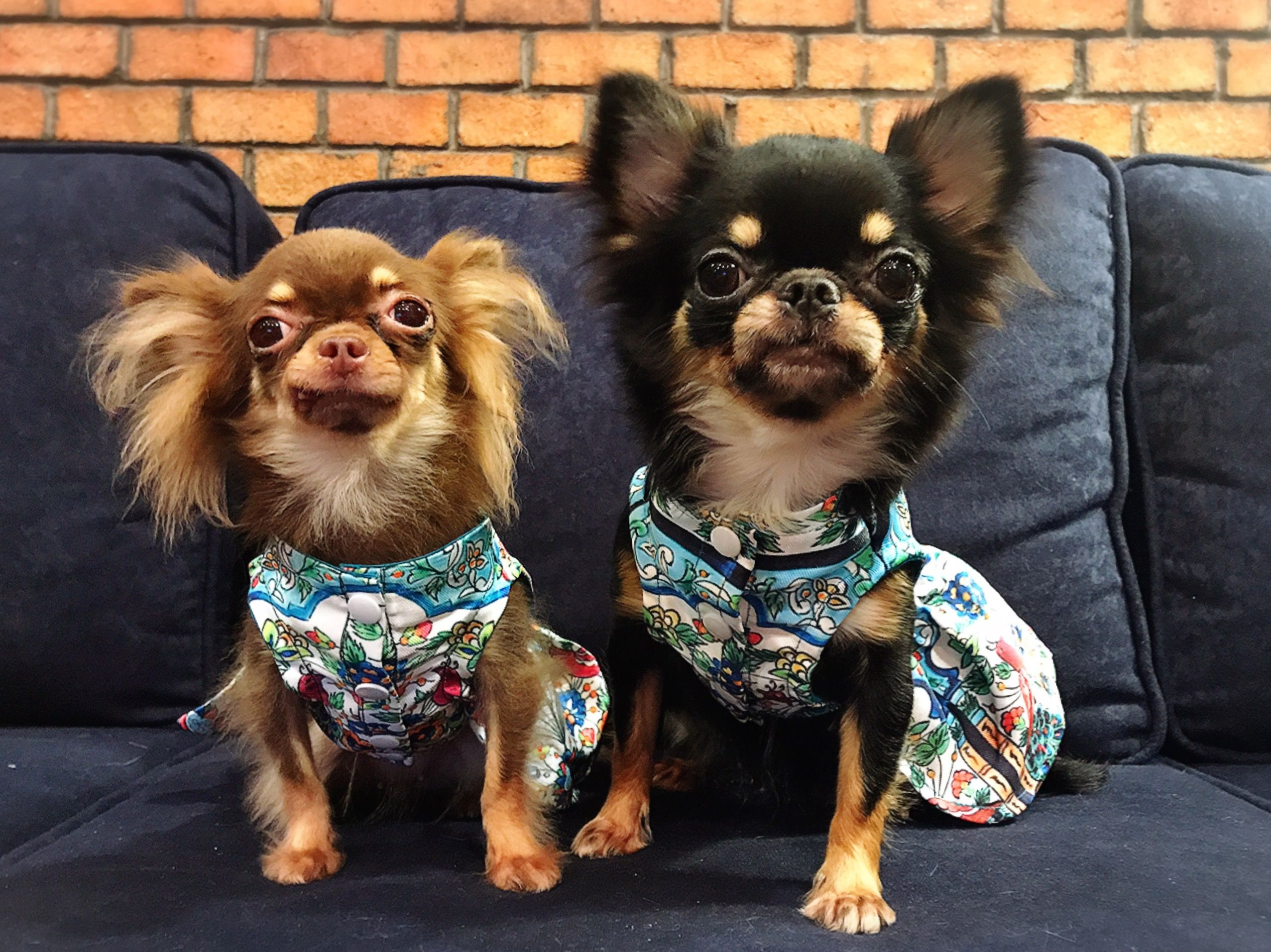 Must see Clothes Army Adorable Dog - e1a136a411d48184b088d0427a8e40d2  Graphic_721578  .jpg