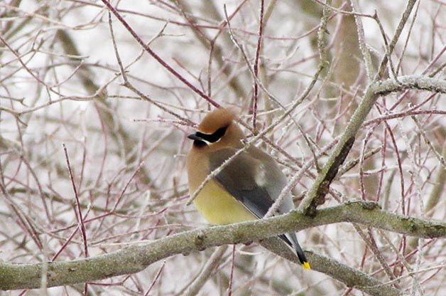 5 Ways to Help Bird Species in Your Backyard | Bird ...