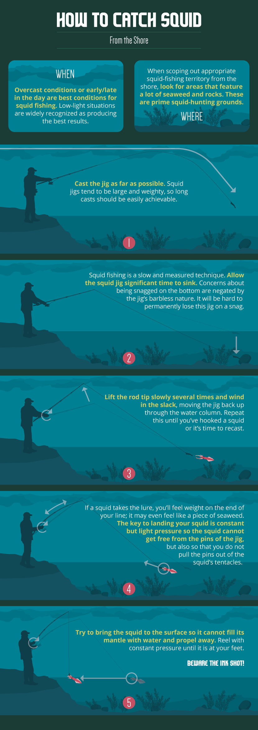 Diagram Of Kelp Off Shore Line Manual Guide