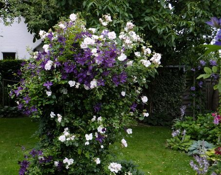 Fresh Rosen und mehr Mein sch ner Garten online