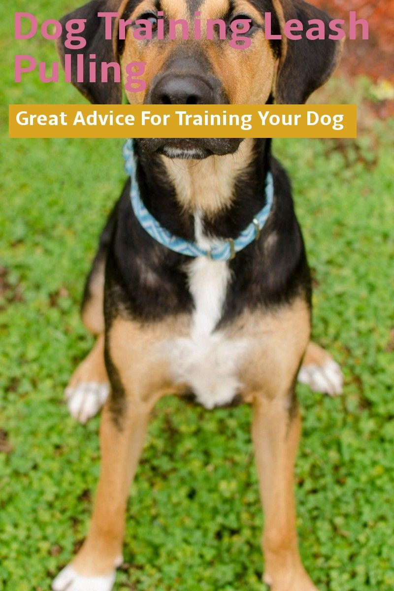 What You Need To Know About Dog Training Leash Pulling Visit The Image Link For More Details Dogtrainingleashpulling Dog Leash Training Dog Training Dogs