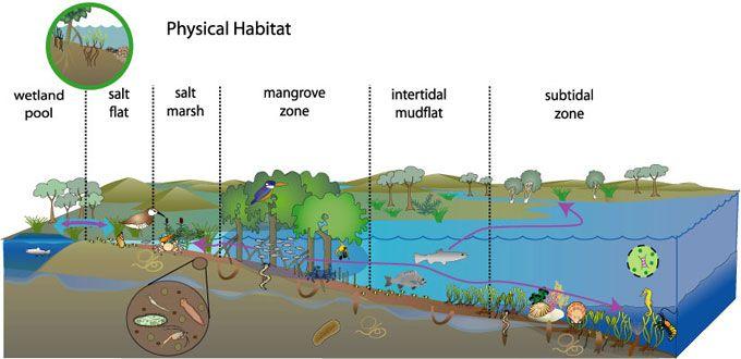 Conceptual Diagram Of Physical Habitat Process