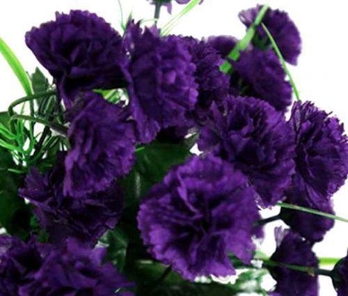 Carnation Grenadin King Of Blacks Seeds Dianthus Caryophyllus Flower Seeds Carnation Plants Carnations