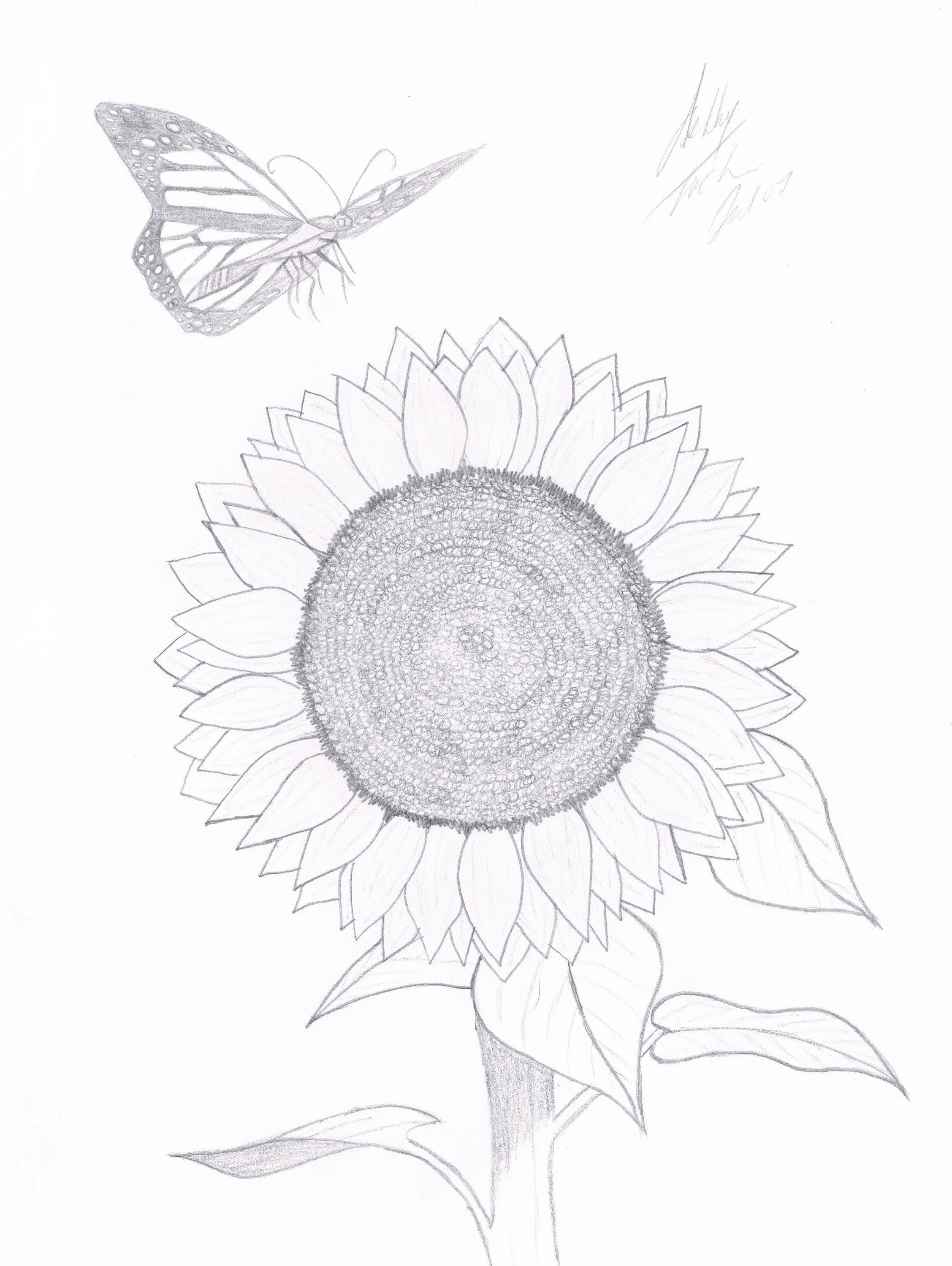 A butterfly's sunflower by ATuckerDesigns on Etsy (With images) | Painting  & drawing, Artsy, Drawings