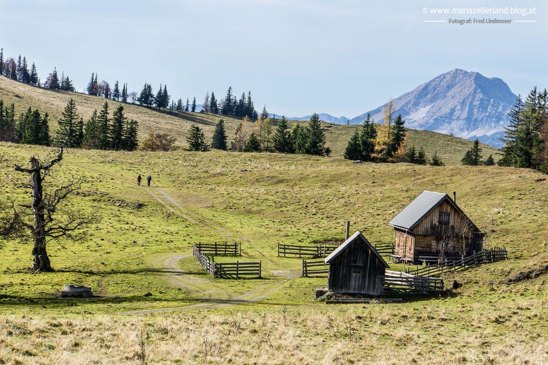 Wanderung auf den Tirolerkogel (1377 m) und  die Kuchl Alm ab Annaberg am 1. Nov. 2016