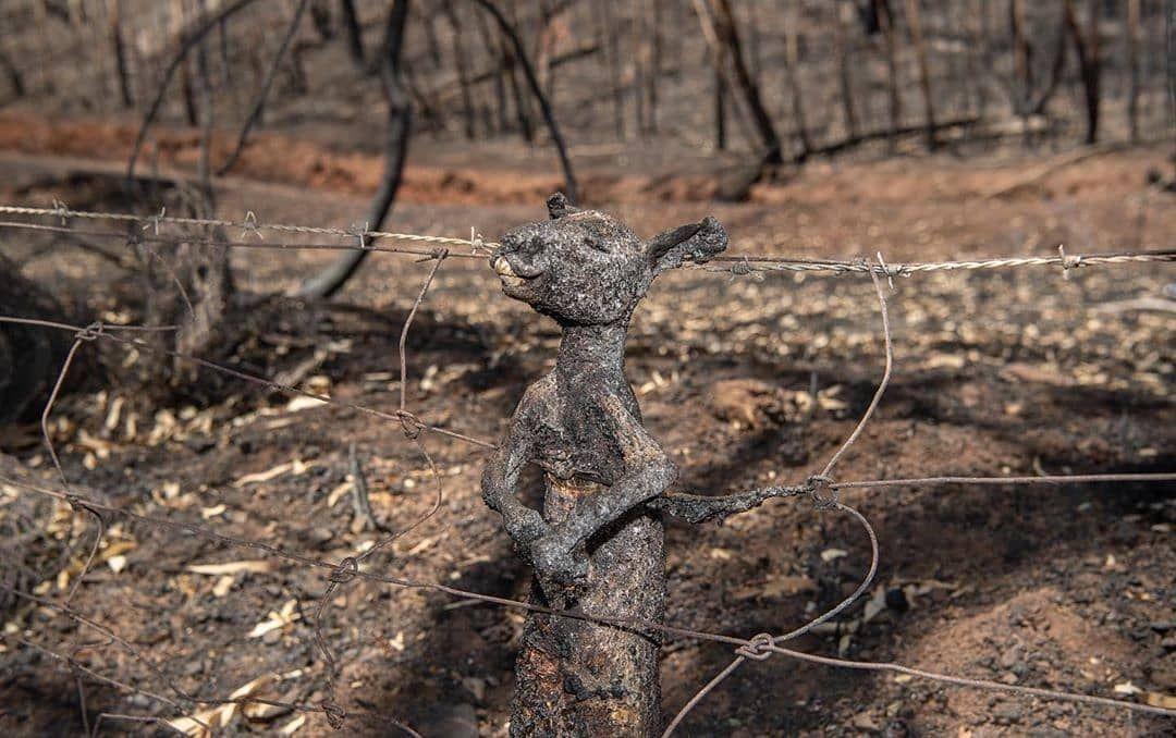 Pray For Australia Forest Fire Animals Life Australia