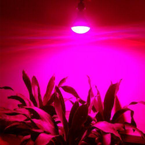 Best Light Bulbs Growing Weed