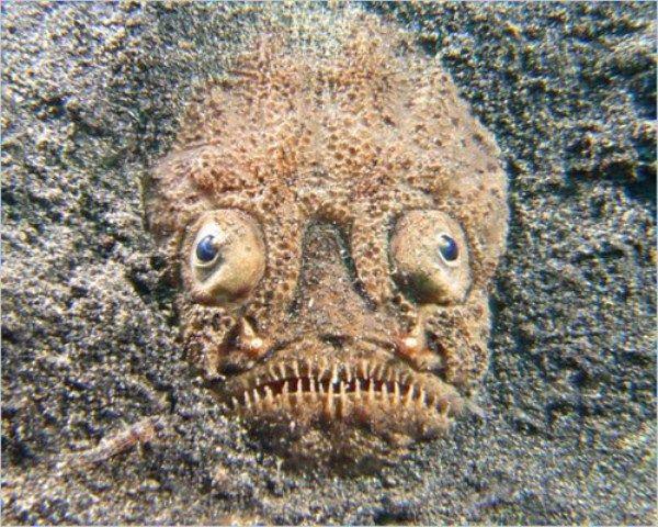Creepy Deep Sea Creatures (39 pictures)