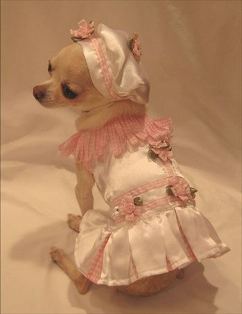 Little Ginger Silky White Dog Harness Dress 3 Piece Set includes Dress, Hat and Leash
