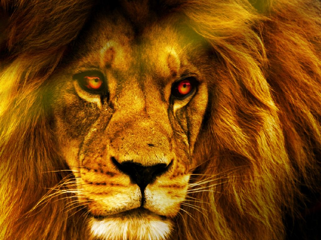 Hd wallpaper lion - Virgin Land Wallpapers Hd Wallpapers Chainimage