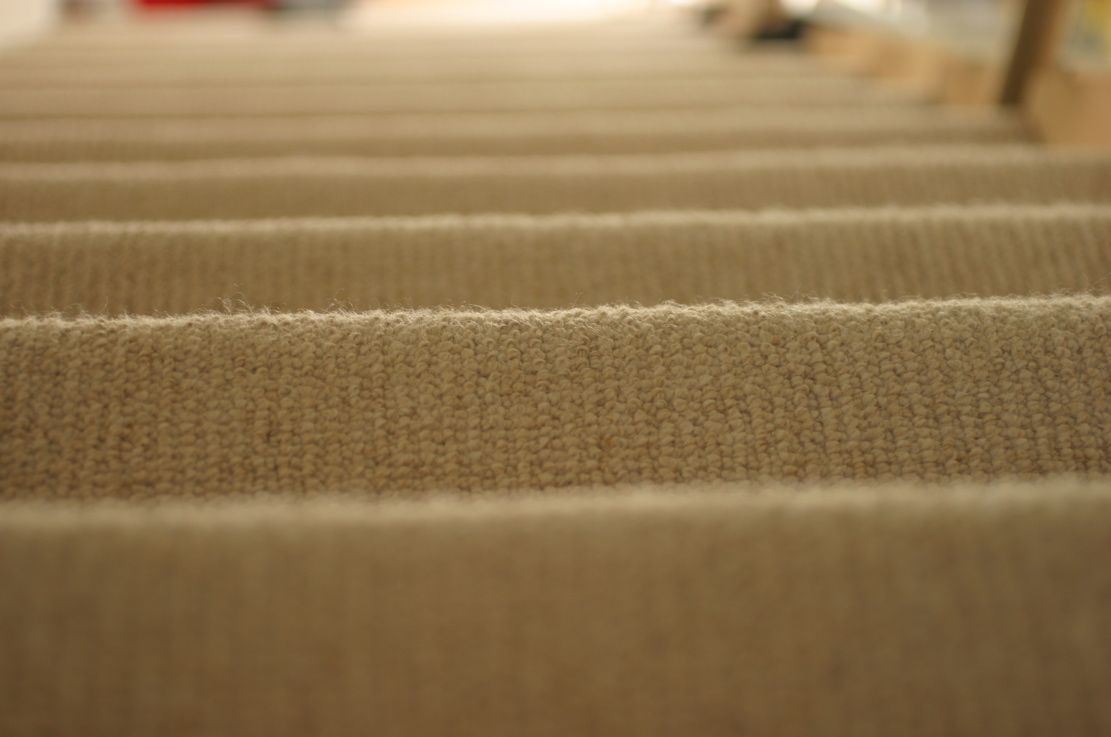 Fact Of The Day Bed Bugs Can Live In Carpet Fibers And Wooden