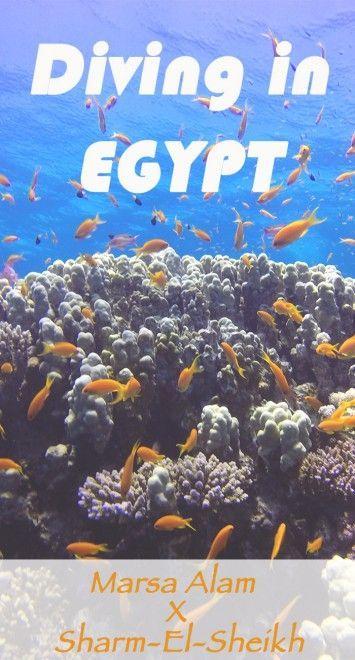 Diving In Marsa Alam X Sharm-El-Sheikh