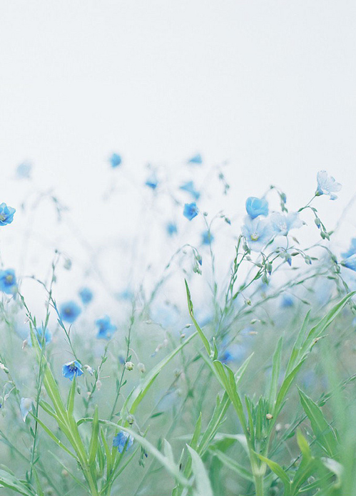 Pin Van Mooi Biezunder 2 Op Natuur Pinterest Fleur Jardin