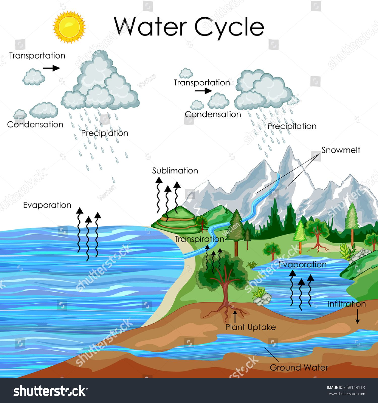 Education Chart Of Biology For Water Cycle Diagram Vector