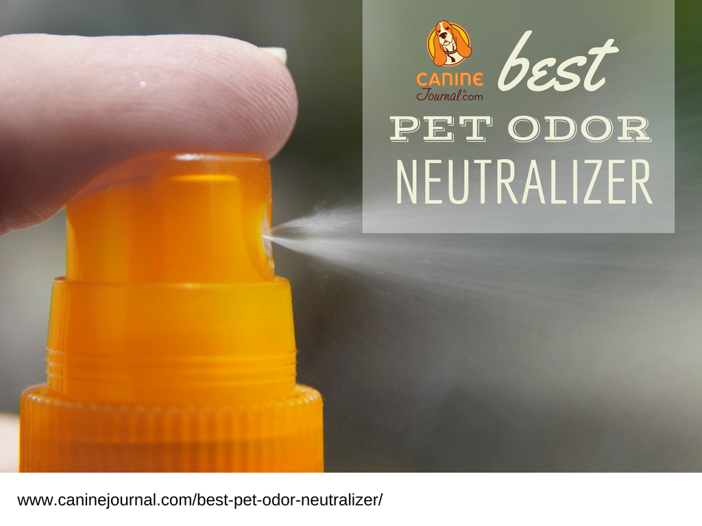 What's That Smell?! Best Pet Odor Neutralizer