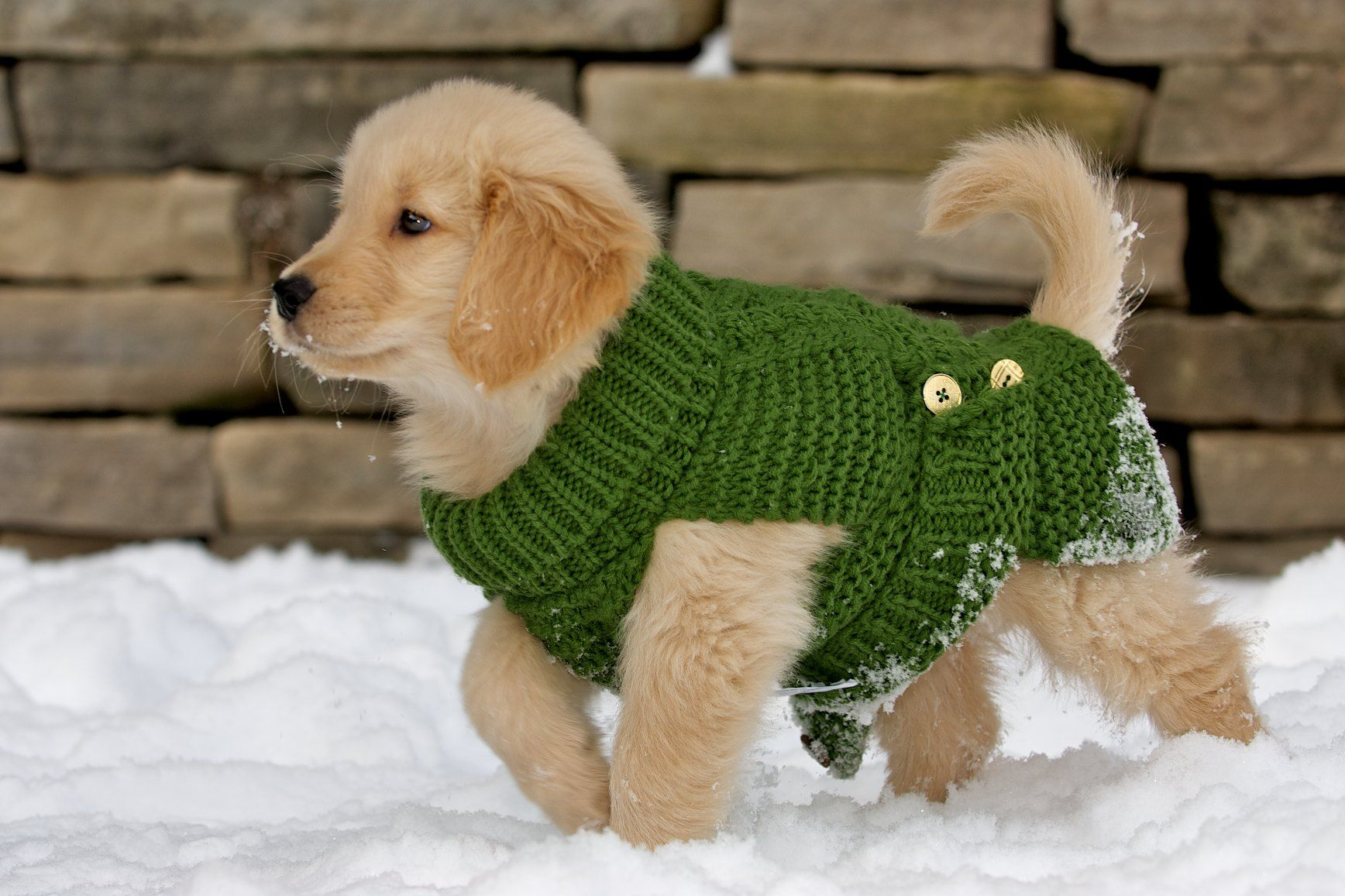 Puppy Strut Golden Retriever Snow Sweater Puppy Arcane I Love Dogs Cute Animals Beloved Dog