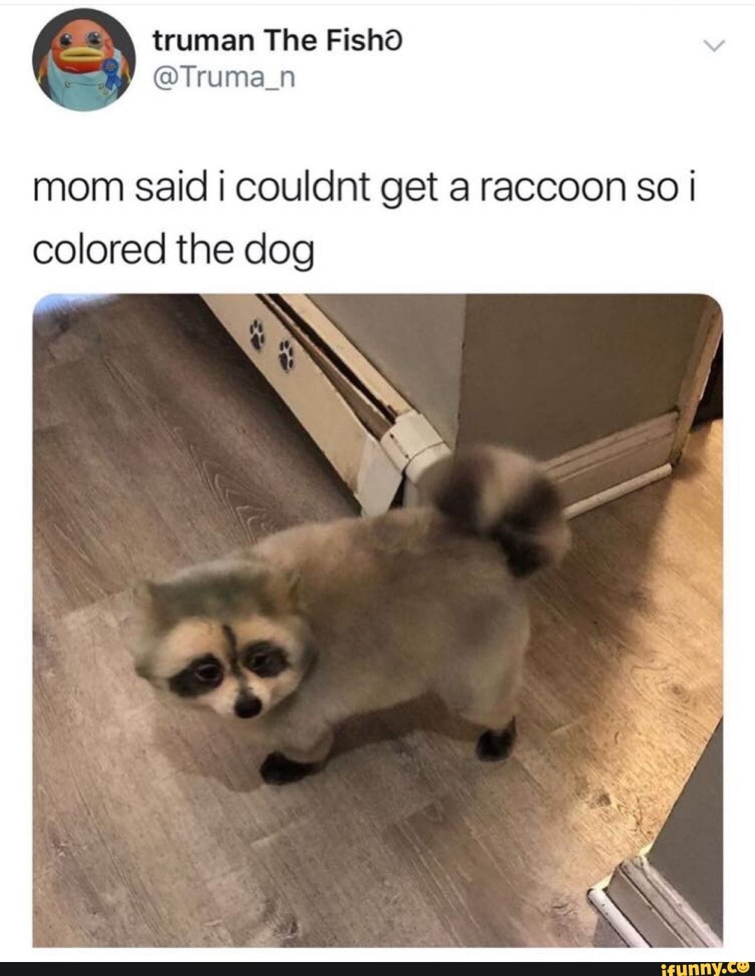 Pet Memes Clean : memes, clean, Couldnt, Raccoon, Colored, IFunny, Animal, Memes, Clean,, Funny, Memes,, Photos