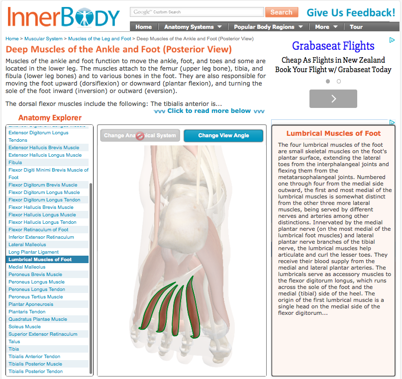Inner Body is another web tool – detailed information that you click ...