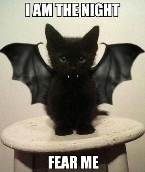 cat halloween memes … | Pinteres…