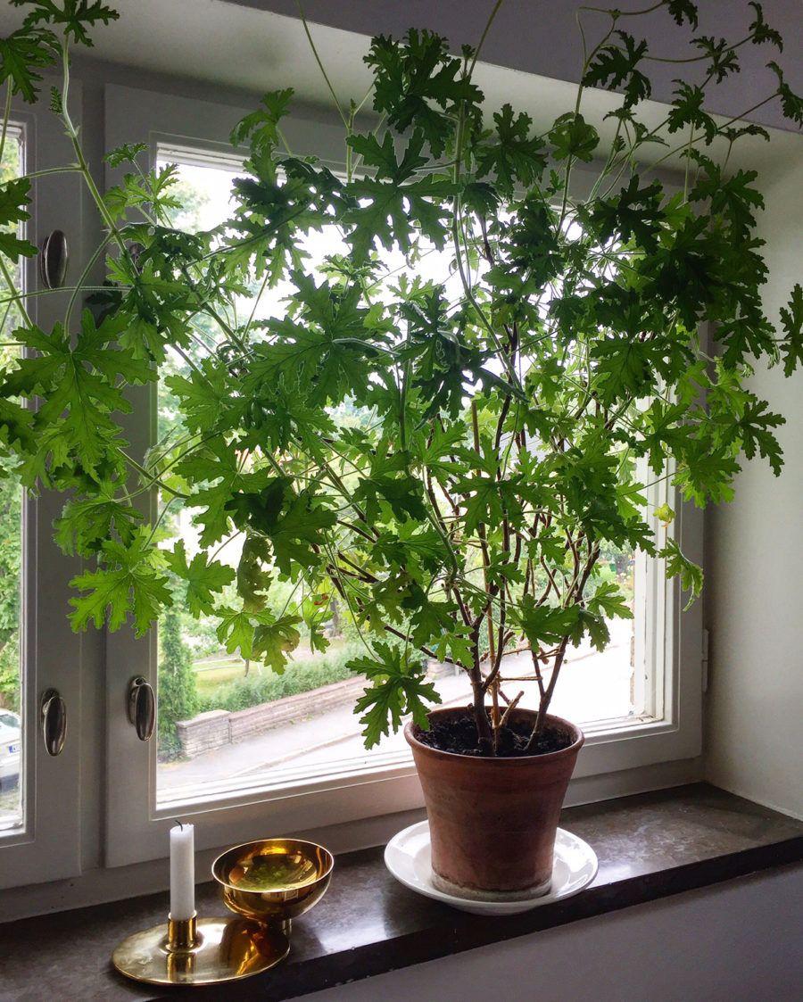 gröna växter inomhus bilder