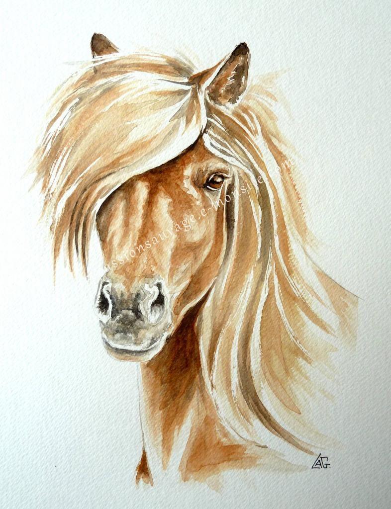 Cheval sauvage dessins - Dessin de chevaux sauvage ...
