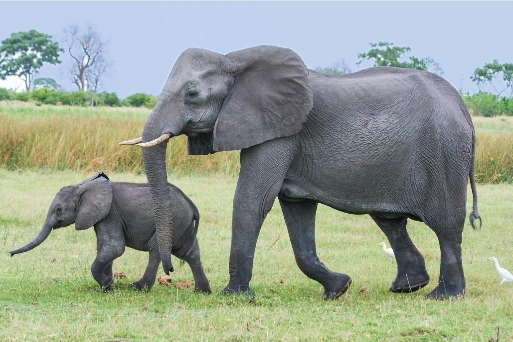 Top 15 Heaviest Animals In The World African bush