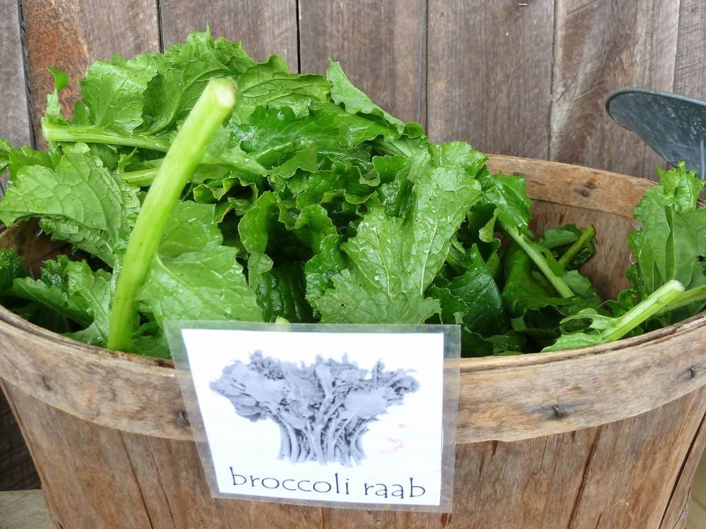Broccoli Rabe Harvest: How And When To Cut Broccoli Raab