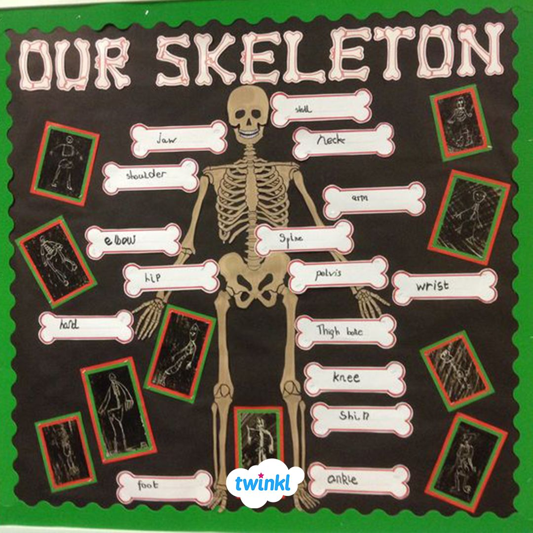 Skeleton Classroom Display Wall Made Using Our Free Human