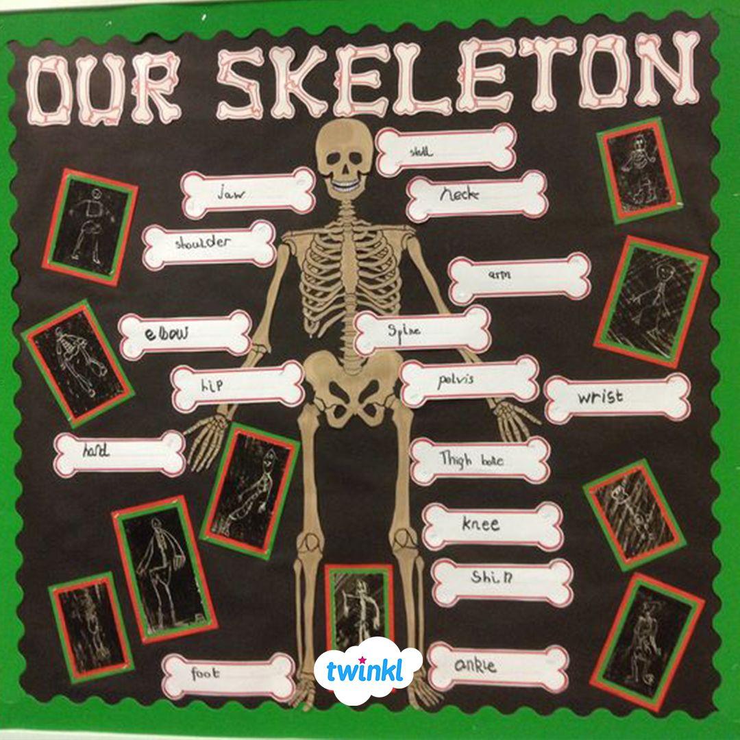 Human Skeleton Labelling Sheet Human Body Classroom Classroom Displays Early Years Classroom [ 1080 x 1080 Pixel ]