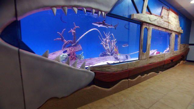 Shark Tank Ganze Folgen