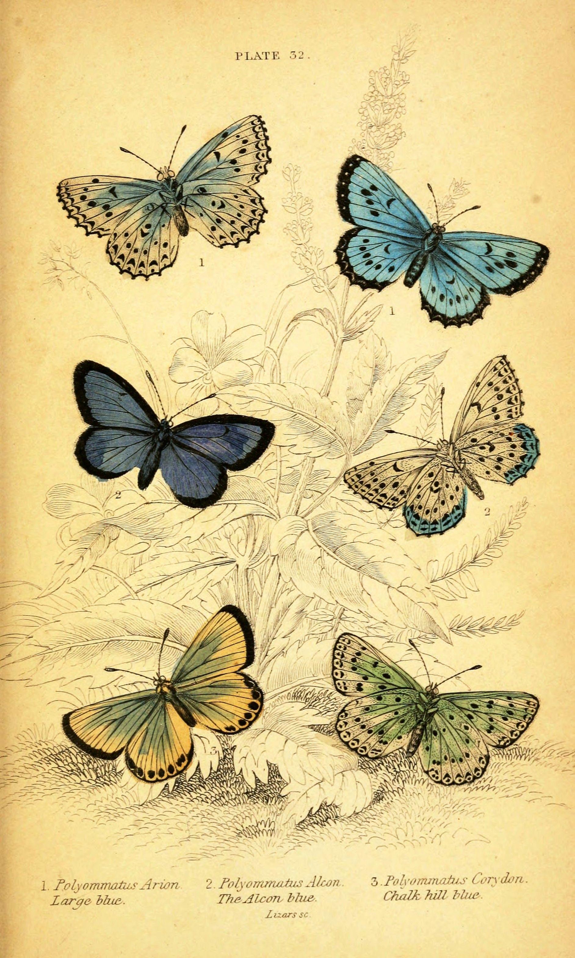 Vintage printables | Mariposa | Pinterest | Buscar con google ...