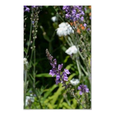 Purple Summer Blossoms Print