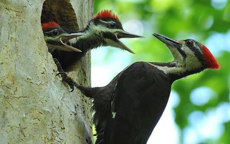 Pin De Marisol Izurieta En Aves Animales Y Sus Crias Pajaro