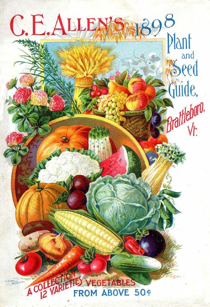 Seed Catalogue Advertisement Art Print Early Vintage