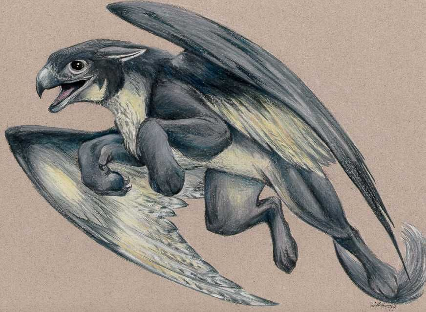 http://library.thinkquest.org/C003239/data/art/caramitten/griffins/peregrine.jpg