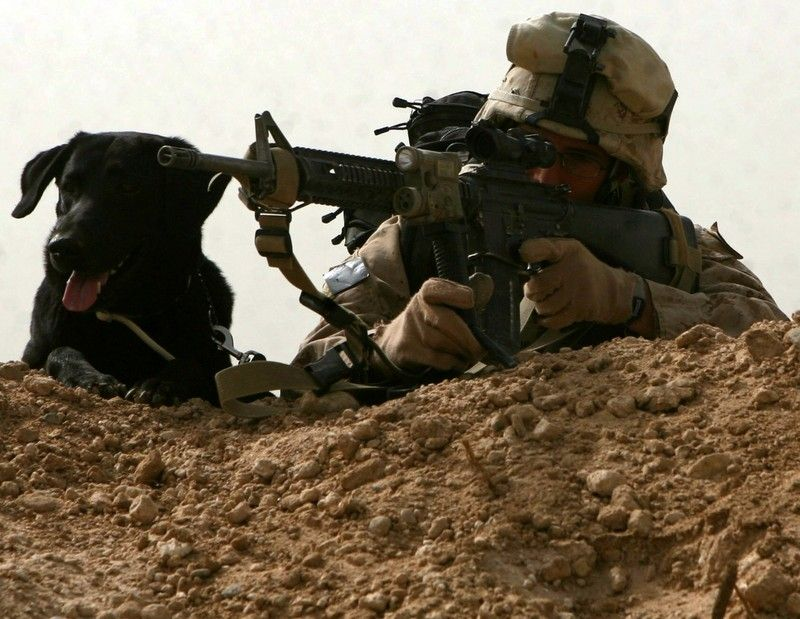 17 Best images about Military Working Dog + on Pinterest ...